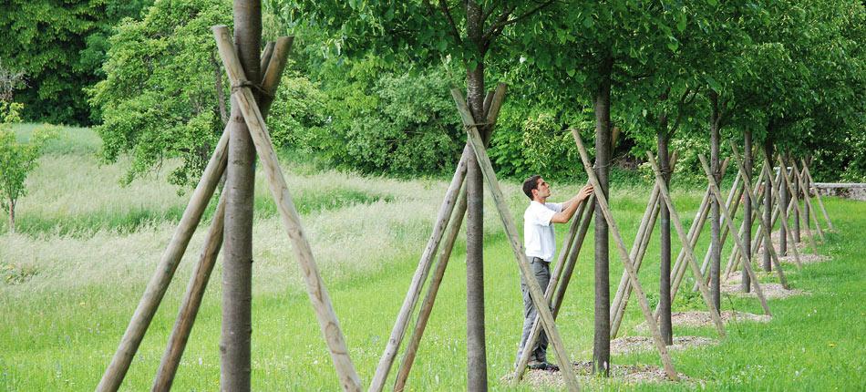 Sitel entretien de jardin for Entretien de jardins